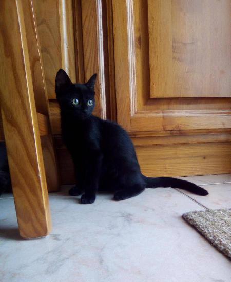 Musha, gatinha aventureira para adoção