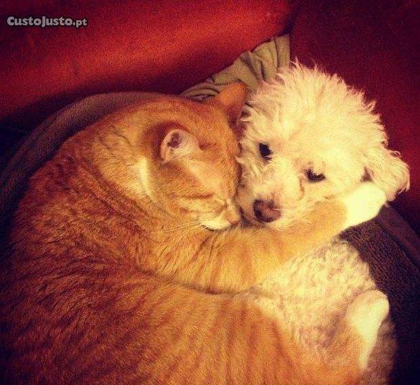Tomo conta de animais cães gatos etc...