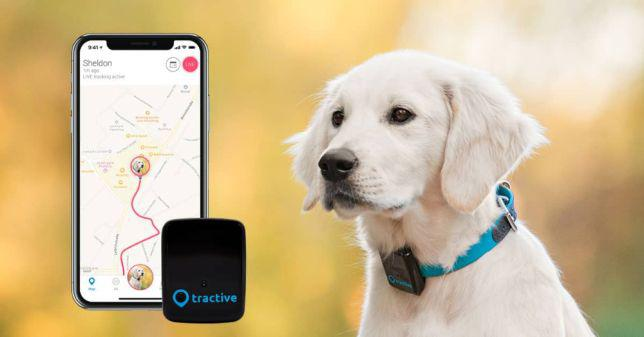 Localizador de gps para cães ou gatosbranco