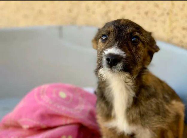 Coco- cachorra de porte pequeno e 10 meses para adoção