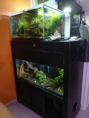 Estrutura com aquários