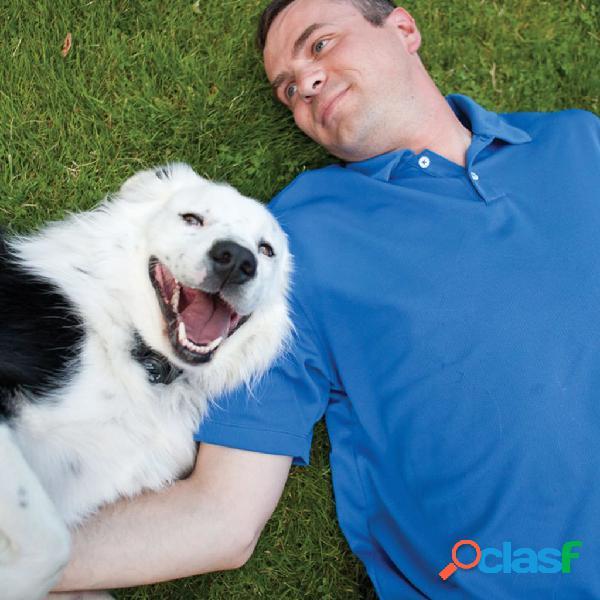 PetSafe PatSafe Sistema contenção p/ animais sem fio +3,6kg 55m cinzento 6085 1