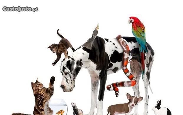 Tomo conta de animais de estimação