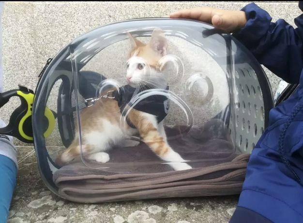 Transportadora animais