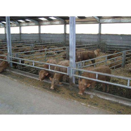 Barreiras(tipo cornadis)para manjedoura vacas