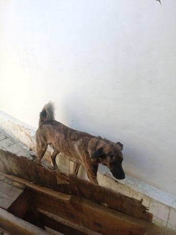 Animais cão