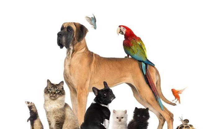 Cuidadora de animais