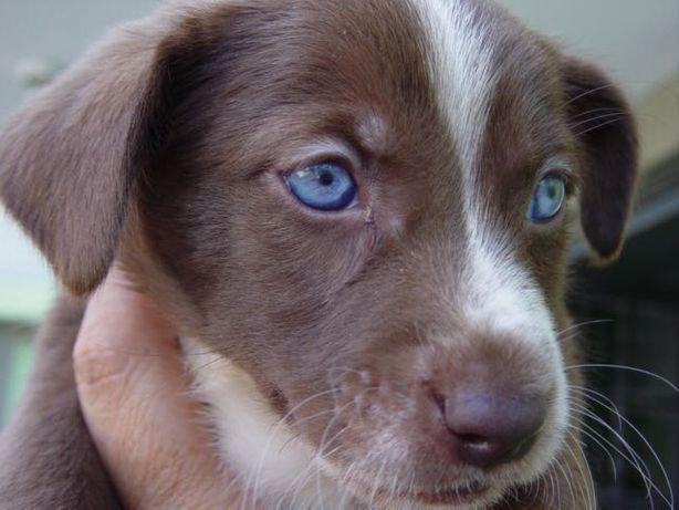 Cão doação urgente