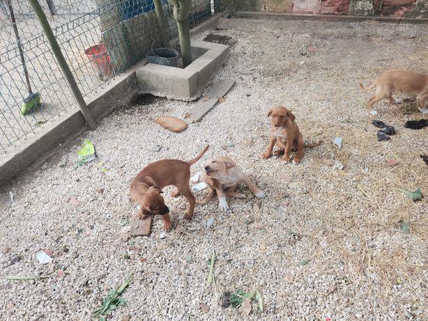 Animais para adopção